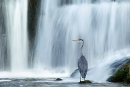 heron-and-waterfall